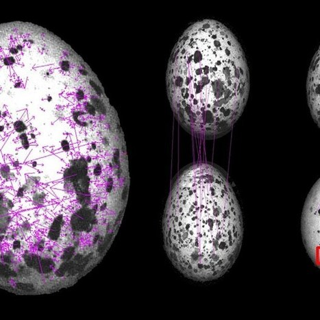 Pattern recognition tools reveal cuckoo eggs arms race | ScienceNow | Scoop.it