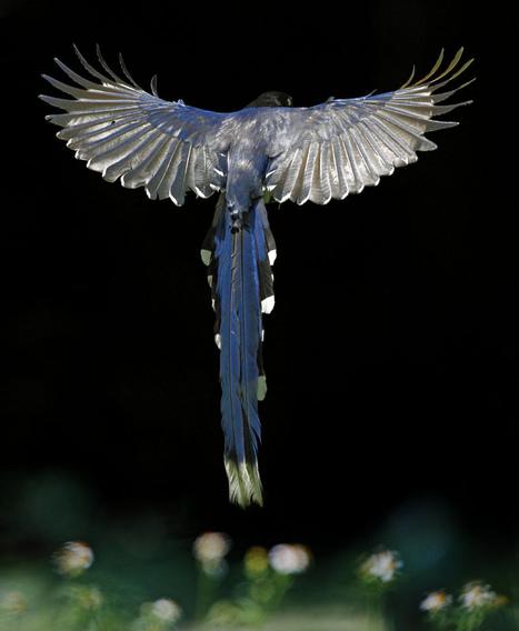 35 Stunning Bird Photography | Everything Photographic | Scoop.it