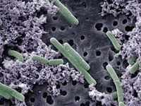 Microbiologists need encouragement | Newspaper | DAWN.COM | Microbial World | Scoop.it