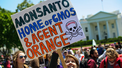 #Monsanto took over regulatory bodies all over the world to lobby #GMO - RT (blog) #share #RT | Messenger for mother Earth | Scoop.it