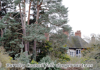 Burnley Council fells dangerous trees | All Accident Claims Blog | Scoop.it