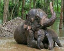 Save the Sumatran Forest! - The Petition Site | The natural world | Scoop.it