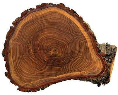 (EN) (IT) (DE) (FR) (ES) (PT) - Multilingual Glossary of Dendrochronology | wsl.ch | Glossarissimo! | Scoop.it