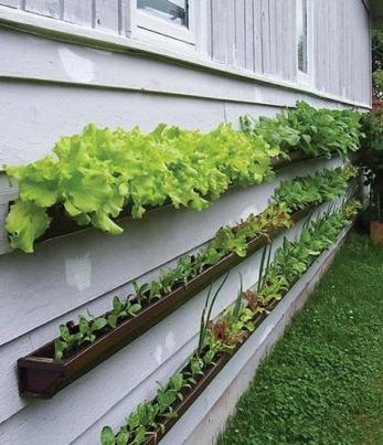 L'idée du jour : créer son jardin vertical avec des gouttières | Changer la donne | Scoop.it