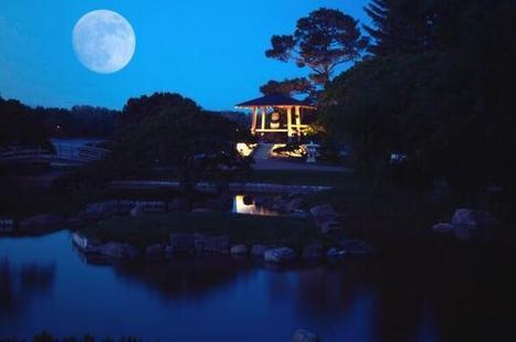 Twitter / mlenaour: The #Japanese #gardens in ... | Japanese Gardens | Scoop.it