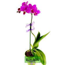 """Plants"" The Heart of Environment | DealGali | Scoop.it"