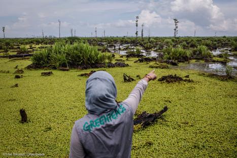 Action contre IOI, l'entreprise qui détruit la forêt tropicale en Indonésie | Biodiversité | Scoop.it