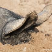 Galerie photo d'éleveurs : Des animaux et des hommes | Actualités de l'élevage | Scoop.it