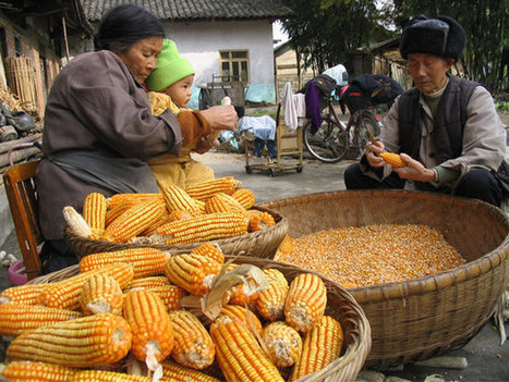 Who will feed China: Agribusiness or its own farmers? Decisions in Beijing echo around the world | Food issues | Scoop.it