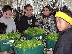 Exploring Classroom Hydroponics | kidsgardening.org | EDP4130 Curation Project: Exploring food production and nutrition to demonstrate how advances in technology impact on our daily lives | Scoop.it