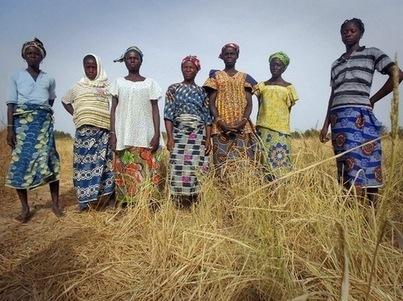 Un rapport met en garde contre la faillite des agriculteurs en Afrique | ISR, DD et Responsabilité Sociétale des Entreprises | Scoop.it