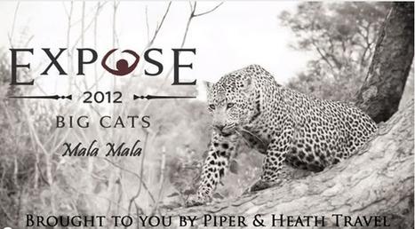 MalaMala and the Big Cat Expose – a Guest Blog Post | MalaMala Blog | Eco Friendly Vacations | Scoop.it