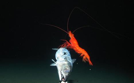 What Lies Beneath: Scientists Get First Peek at Rare Deep-Sea Life - NBCNews.com | What's Happening? | Scoop.it