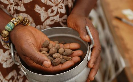 A Bunch of Big Names are Trying to Save Africa's Orphan Crops—Here's Why That Matters - Modern Farmer | sustainablity | Scoop.it
