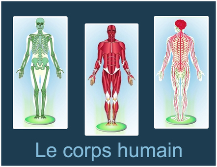 Le corps humain : modules interactifs | TICE, Web 2.0, logiciels libres | Scoop.it