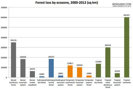 La déforestation | Autres Vérités | Scoop.it