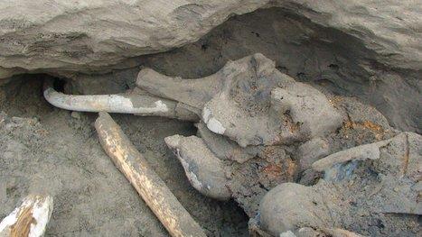 La Sibérie, cimetière de mammouths - Rue89 | Merveilles - Marvels | Scoop.it