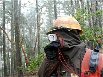 Judge orders BLM to sell more timber in S. Oregon | Timberland Investment | Scoop.it