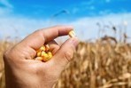 Kmeta kaznovali, znanstvenike utišali: tako so potihem prevzeli nadzor nad semeni in hrano | Globus | Scoop.it