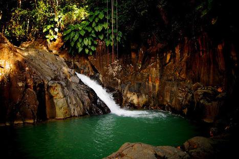 LES PETITS PARADIS DE MANON: Saut D'Acomat, (Pointe-Noire, Guadeloupe) | Naviguer dans les caraïbes | Scoop.it