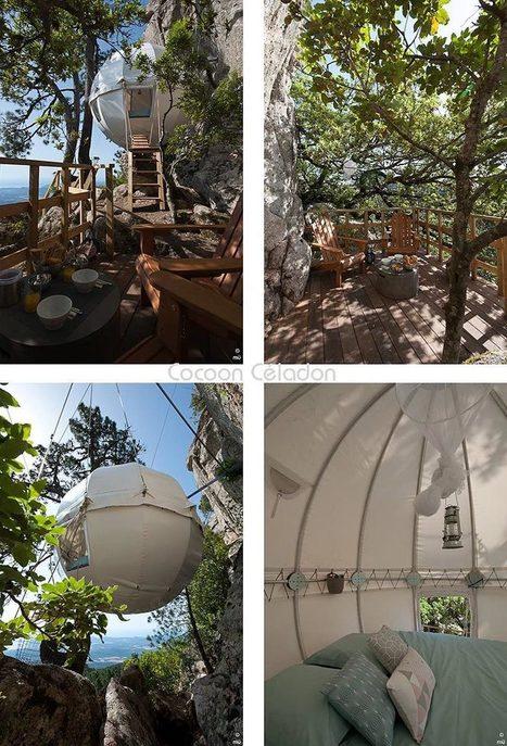 Découverte de «l'Arbre Cocoon» : le glamping éco-responsable | Ecotourisme | Scoop.it