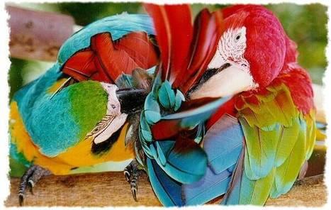 Popplet   Las aves   Scoop.it
