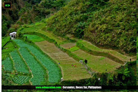 EDMARATION #TownExplorer: Rice Terraces | Turning to Vegetable Terraces Too | #TownExplorer | Exploring Philippine Towns | Scoop.it