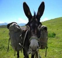 Vacances écolos : randonnée avec des ânes dans le Vercors - Blog Bio, Santé, Beauté   Bio, Santé et Bien-être   Scoop.it