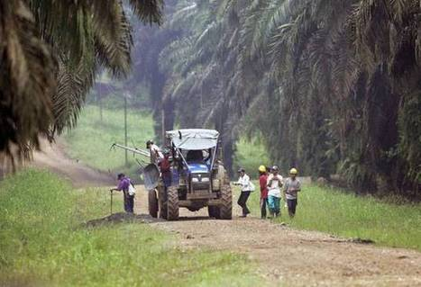 Government 'greatly concerned' by palm oil production | Say No To Palm Oil | Scoop.it