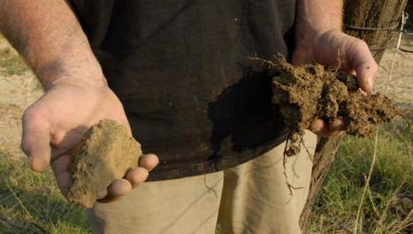 30 ans de respect de la Terre, le côté humus de ma terre se voit comparé à la motte de mon voisin.   EDD-Robert Schuman   Scoop.it