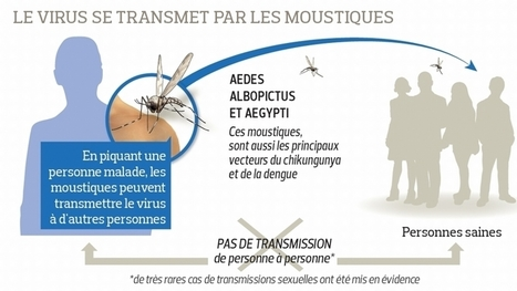 Le virus Zika en cinq questions | EntomoScience | Scoop.it