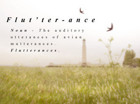 Jane Pitt - Flutterances | DESARTSONNANTS - CRÉATION SONORE ET ENVIRONNEMENT - ENVIRONMENTAL SOUND ART - PAYSAGES ET ECOLOGIE SONORE | Scoop.it