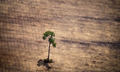Amazon deforestation picking up pace, satellite data reveals | Geography in the classroom | Scoop.it