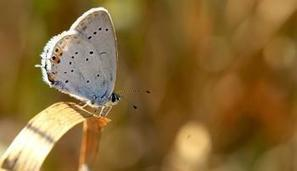 L'Open Data pour la biodiversité   Variétés entomologiques   Scoop.it