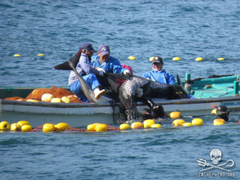 @SeaShepherd Conservation Society :: #DolphinTrainer Group Makes Laughable Attempt to Justify the Unjustifiable   Rescue our Ocean's & it's species from Man's Pollution!   Scoop.it