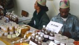 LES ABEILLES MALGACHES EN DANGER | LE COEUR ET LA VOIX DE MADAGASCAR | Abeilles, intoxications et informations | Scoop.it