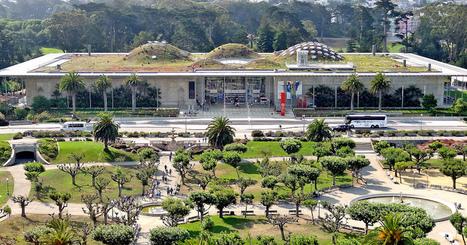 San Francisco veut végétaliser ses toits   Dans l'actu   Doc' ESTP   Scoop.it
