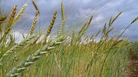 « L'agriculture biologique et ses circuits démontrent qu'il existe des alternatives viables »   Chronique d'un pays où il ne se passe rien... ou presque !   Scoop.it