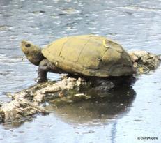 Coldwater Farm Wildlife Update | GarryRogers Biosphere News | Scoop.it
