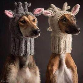 Twitter / tinadjarvis: @Grandma_Bobbins wanted to ... | Womens' Hats | Scoop.it