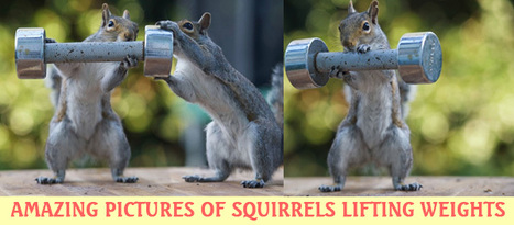 These Amazing pictures of squirrels lifting weights will crack you up | Entertainment | Scoop.it