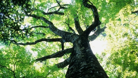 Learn in-depth about ecological sustainability | sustainability | Scoop.it