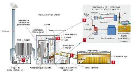 USOS DE LA BIOMASA - Energía de la Biomasa | Energía a partir de Biomasa | Scoop.it
