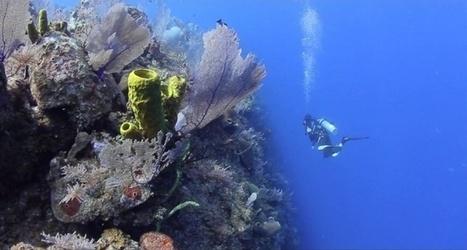 Vidéo plongée Full HD | Mur de corail aux Îles Caïmans ! | Plongeurs.TV | Scoop.it