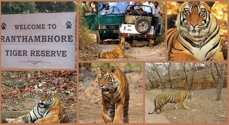 Ranthambore Tiger Safari: One of The Best Places For Safari In India   Safaris in India & Africa   Scoop.it
