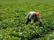 Sécurité alimentaire : L'assurance agricole pour réduire les risques | Questions de développement ... | Scoop.it