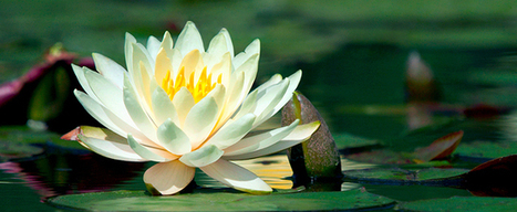 TMS depression | | Mindfulness program | Scoop.it