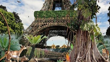 Des animaux sauvages à Paris | 16s3d: Bestioles, opinions & pétitions | Scoop.it