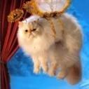 Do Cats Go To Heaven? | feline facts | Scoop.it