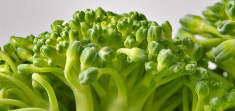 Le brocoli : tout beau, tout bio ? | HORTICULTURE BOTANIQUE | Scoop.it